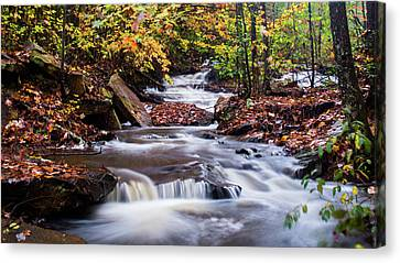Canvas Print featuring the photograph Forest Gem by Parker Cunningham