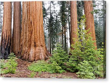 Canvas Print featuring the photograph Forest Growth by Peggy Hughes