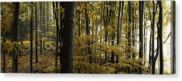forest I Canvas Print