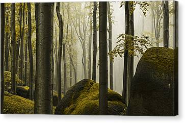 forest II Canvas Print by Lukas Holas