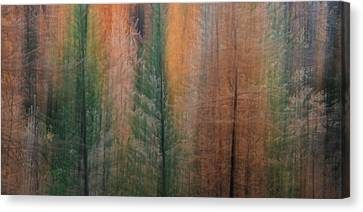 Forest Illusion- Autumn Born Canvas Print