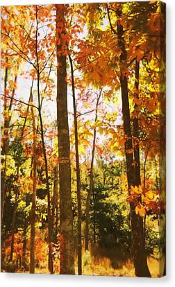 Forest In Fall Canvas Print by Utopia Concepts