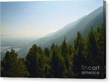 Forest In Israel Canvas Print by Gail Kent