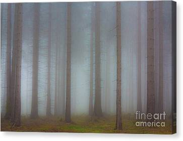 Forest In The Fog Canvas Print by Michal Boubin