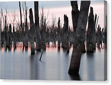 Forest In The Water Canvas Print by Jennifer Ancker
