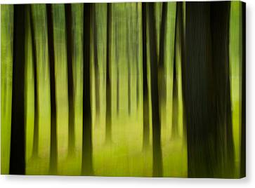 Canvas Print featuring the photograph Forest by Joye Ardyn Durham