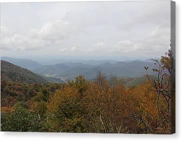 Forest Landscape View Canvas Print
