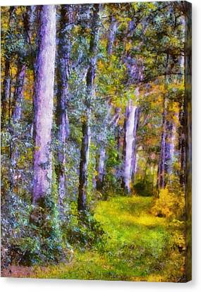 Forest Light Canvas Print by Dan Sproul