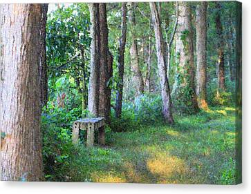 Forest Meditation In Summer Canvas Print by Dan Sproul