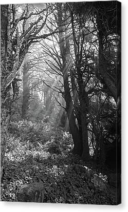 Forest Morning Canvas Print by HW Kateley