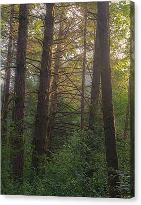 Forest Morning Canvas Print by Joseph Smith