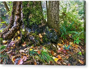 Forest Moss Canvas Print by Andrew Kazmierski