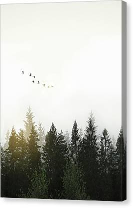 Canvas Print featuring the photograph Forest by Nicklas Gustafsson
