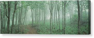 Forest Niigata Martsunoyama-cho Japan Canvas Print by Panoramic Images