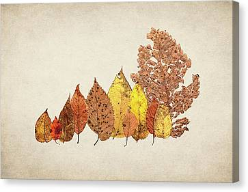 Forest Of Autumn Leaves II Canvas Print by Tom Mc Nemar