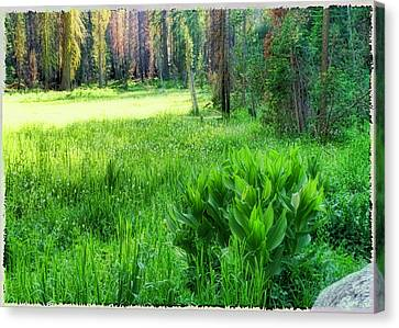 Forest Of Color Canvas Print by Michael Cleere