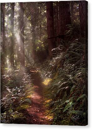 Forest Path Canvas Print by Leland D Howard