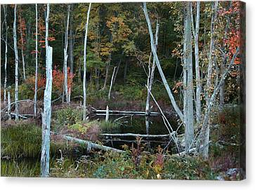 Forest Pond Canvas Print by Joseph G Holland