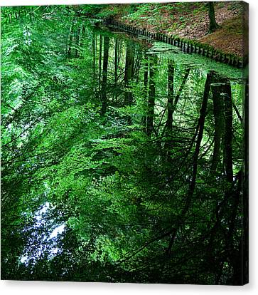 Forest Reflection Canvas Print by Dave Bowman