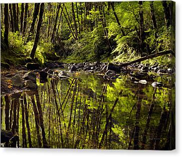 Forest Reflections Canvas Print by Leland D Howard