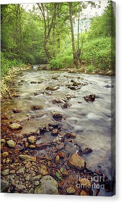 Beautiful Creek Canvas Print - Forest River Cascades by Jelena Jovanovic