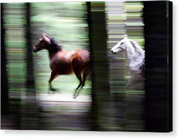 Forest Run Canvas Print by Randall Ingalls