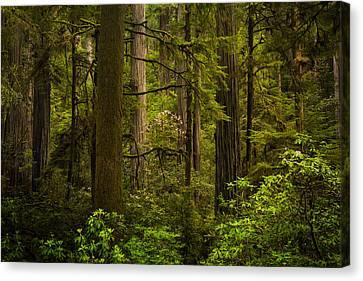 Forest Serenity Canvas Print by Thorsten Scheuermann