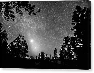 Forest Silhouettes Constellation Astronomy Gazing Canvas Print by James BO  Insogna