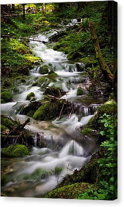 Forest Stream Canvas Print by Blaz Gvajc