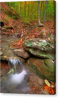 Forest Stream Canvas Print by Ryan Heffron