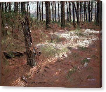 Forest Stump Canvas Print