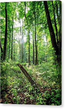 Canvas Print featuring the photograph Forest Sun by Alan Raasch