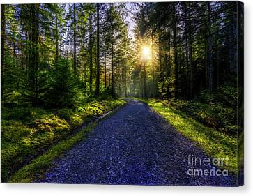 Canvas Print featuring the photograph Forest Sunlight by Ian Mitchell
