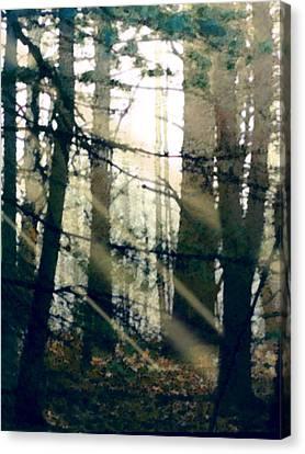 Forest Sunrise Canvas Print by Paul Sachtleben