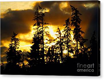 Canvas Print featuring the photograph Forest Sunset  by Nick Gustafson