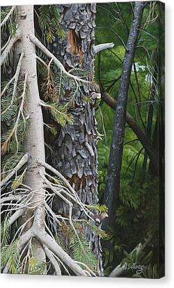 Forest Textures Canvas Print by Wendy Ballentyne