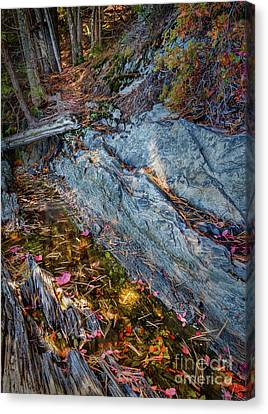 Forest Tidal Pool In Granite, Harpswell, Maine  -100436-100438 Canvas Print by John Bald