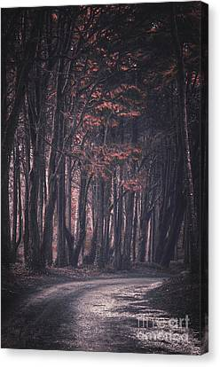 Forest Trail Canvas Print by Carlos Caetano