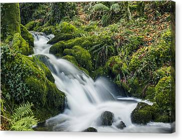 Forest Treasures  Canvas Print by Ian Mitchell