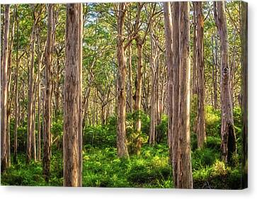 Forest Twilight, Boranup Forest Canvas Print