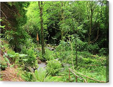 Canvas Print featuring the photograph Forest Walk by Aidan Moran