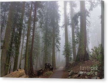 Canvas Print featuring the photograph Forest Walking Path by Peggy Hughes