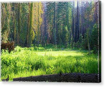 Foresta Canvas Print by Michael Cleere