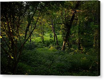 Forestland In Sudbury Ma Wayside Inn Canvas Print by Toby McGuire