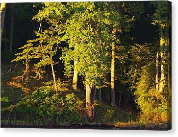 Forests Edge Canvas Print