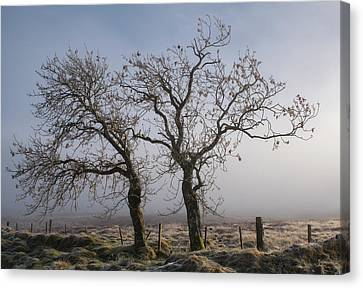 Canvas Print featuring the photograph Forever Buddies Facing The Fog by Jeremy Lavender Photography