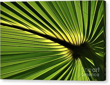 Forever Fronds Canvas Print