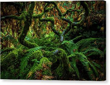 Forever Green Canvas Print by Edgars Erglis