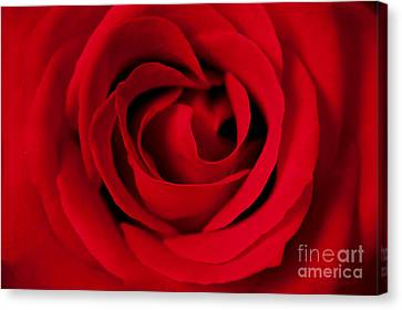 Forever Red Canvas Print