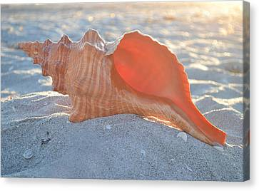 Canvas Print featuring the photograph Forever Sanibel by Melanie Moraga
